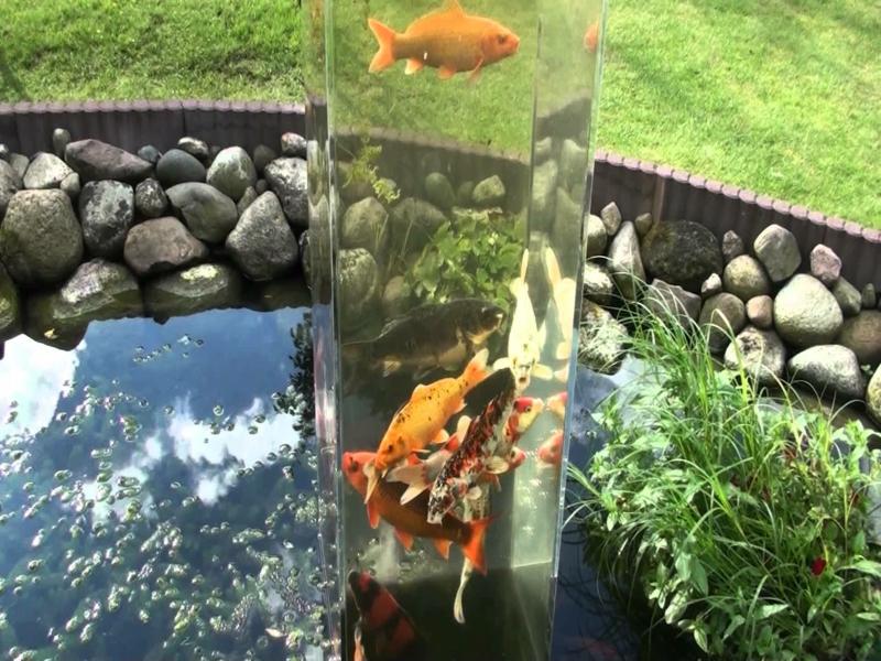 Wie einen wassergarten f r extravaganz selbs anzulegen for Aquarium fische im gartenteich