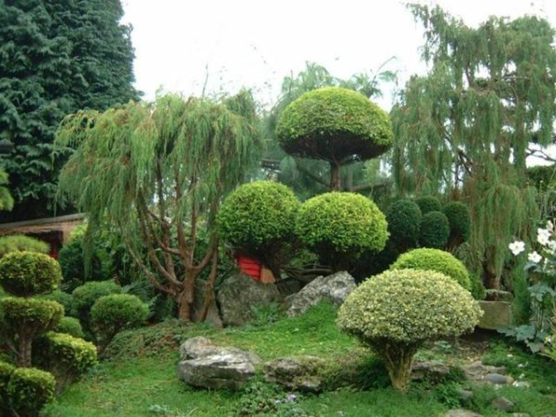 Bäume im japanischen Garten