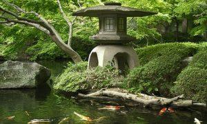 Goldfische im japangarten