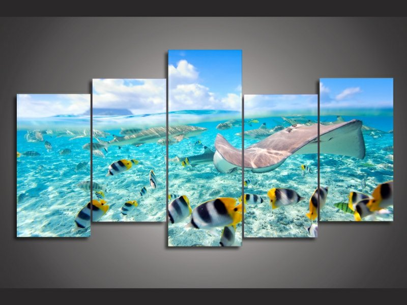 fünf bilder mit tropischen fischen an der wand