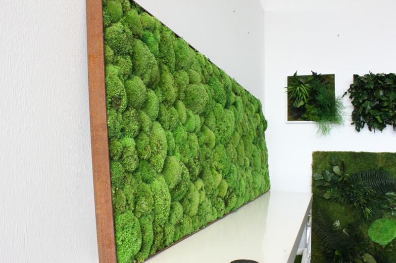 vertikaler garten Kugelmoos Indoor Stylegreen