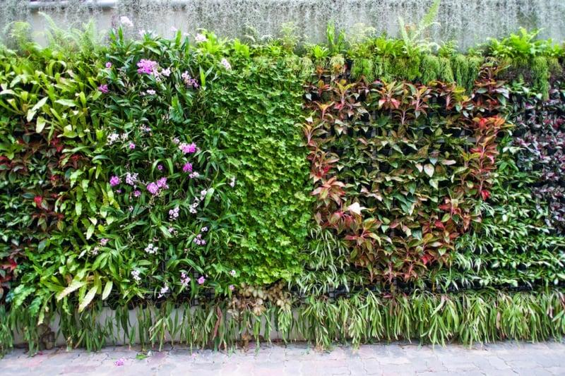 vertikaler garten pflanzen draussen