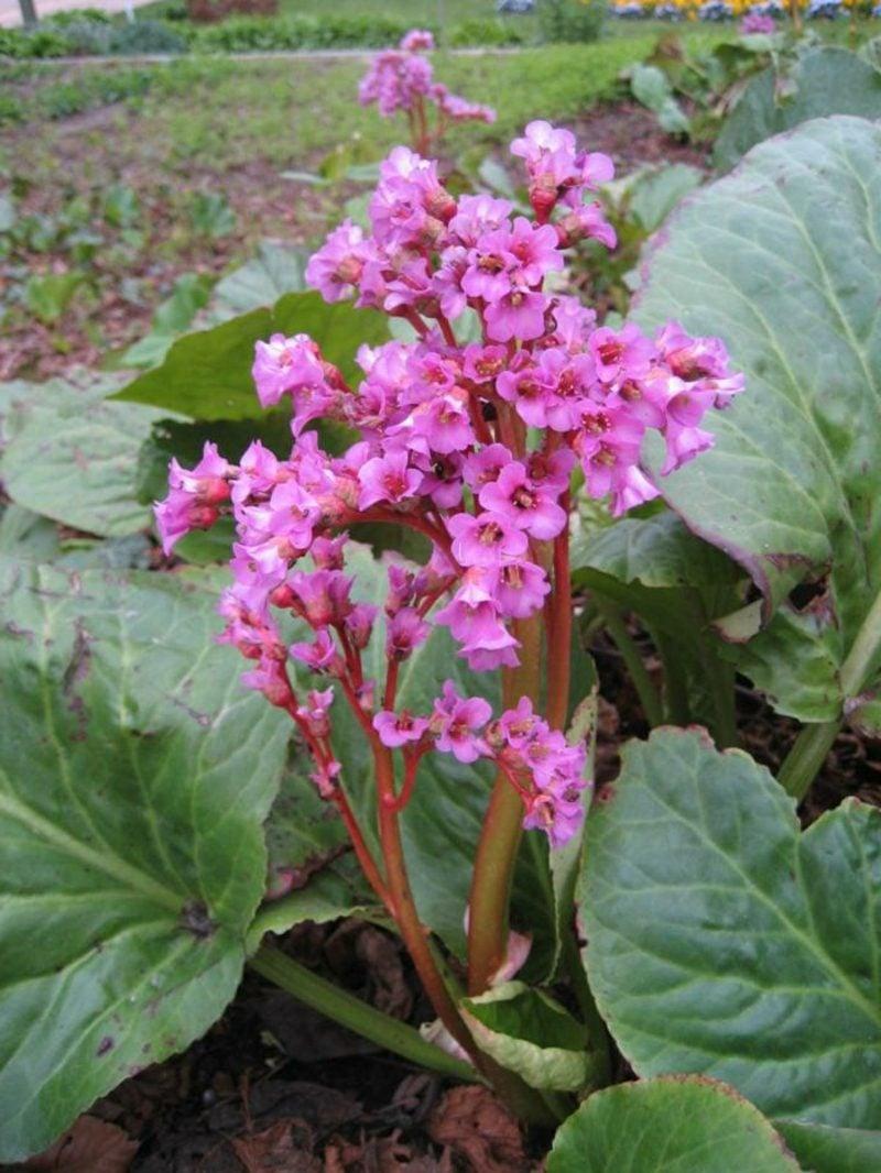 schattenliebende Pflanzen