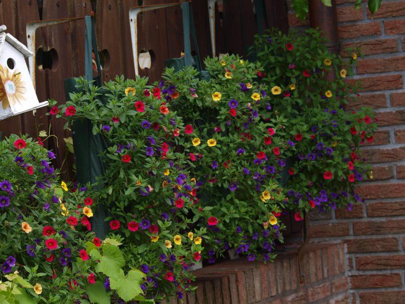 blühende Pflanzenarten Terrasse
