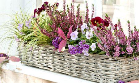 herrliche Blumen Terrassengestaltung