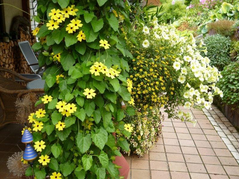 Bepflanzung der Terrasse Ideen und Inspirationen