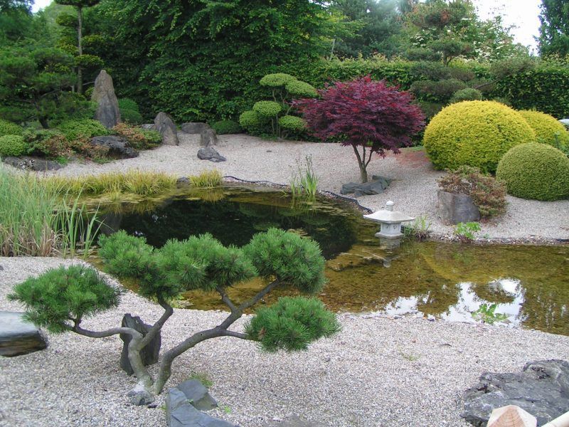Zengarten Pflanzenarten