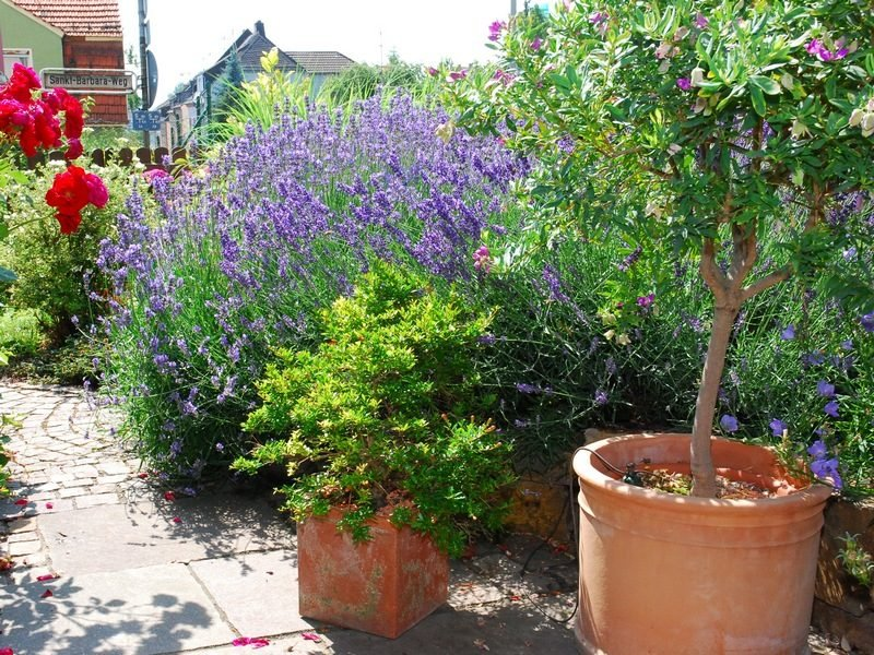 Ideen und Inspirationen Terrassenbepflanzung