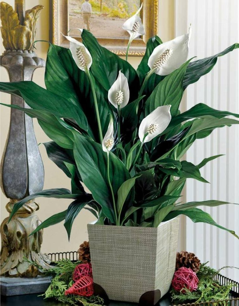 13 pflegeleichte bl hende zimmerpflanzen for Dekorative bilder wohnzimmer