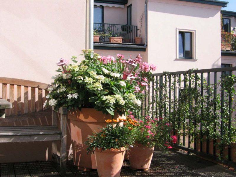 Terrassenpflanzen Oleander