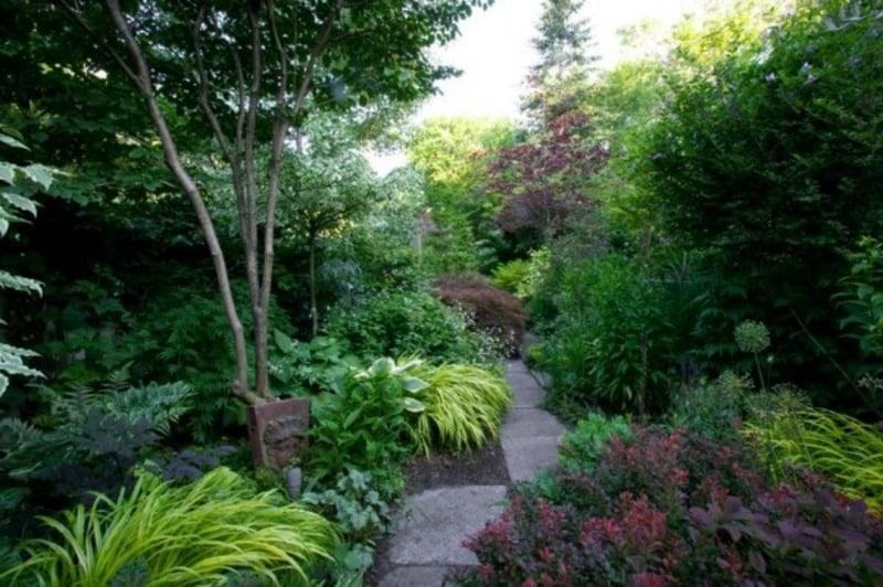 schattenliebende Pflanzenarten Gartengestaltung