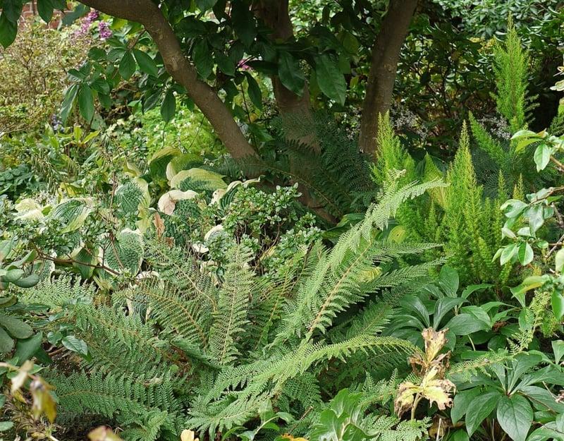die Schattenbereiche im Garten bepflanzen