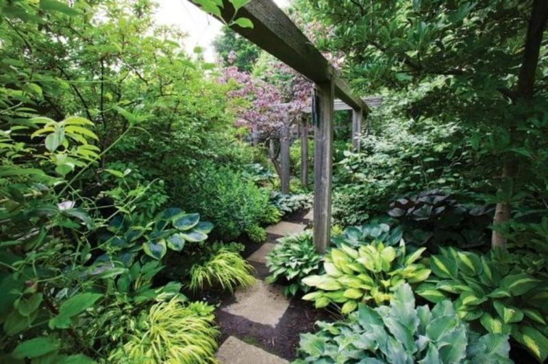 6 arten von schattenpflanzen f r einen wundersch nen garten. Black Bedroom Furniture Sets. Home Design Ideas