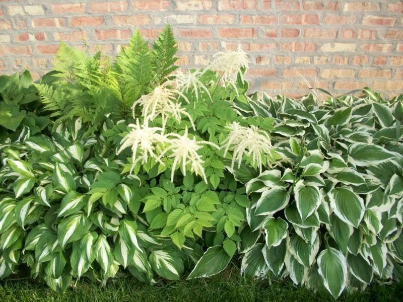 Gartengestaltung schattenliebende Pflanzenarten