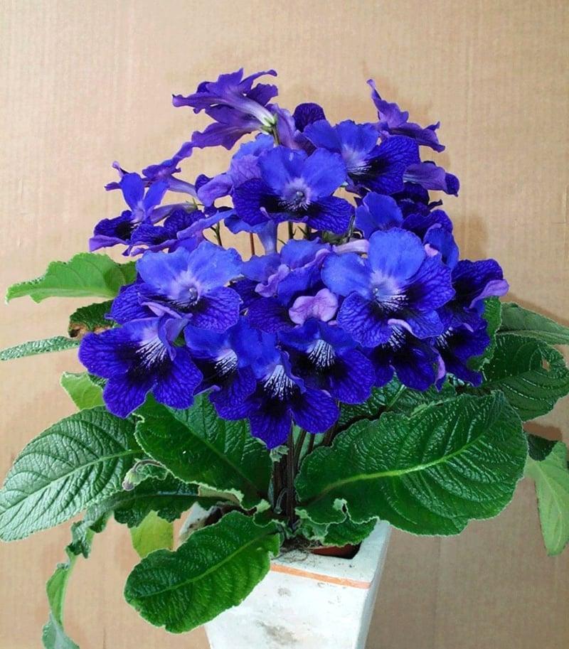 Blühende Zimmerpflanzen 13 pflegeleichte blühende zimmerpflanzen