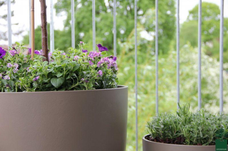 Pflanzenarten Terrasse