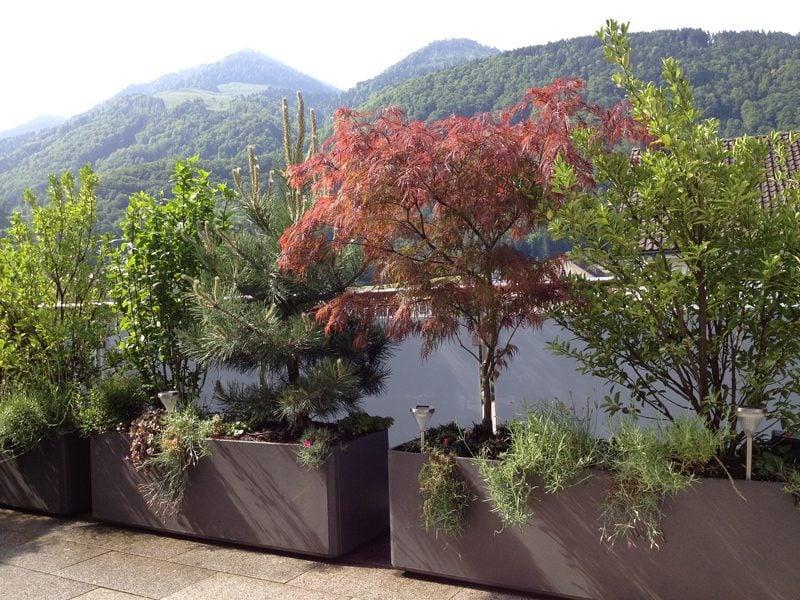 Terrassenbepflanzung: Praktische Tipps Und Kreative Ideen