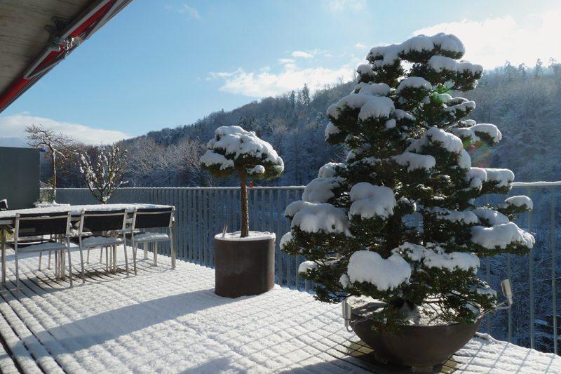 winterharte Terrassenbepflanzung
