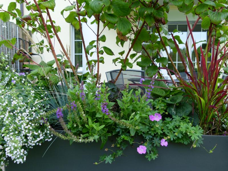 Ideen und Isprationen Bepflanzung der Terrasse