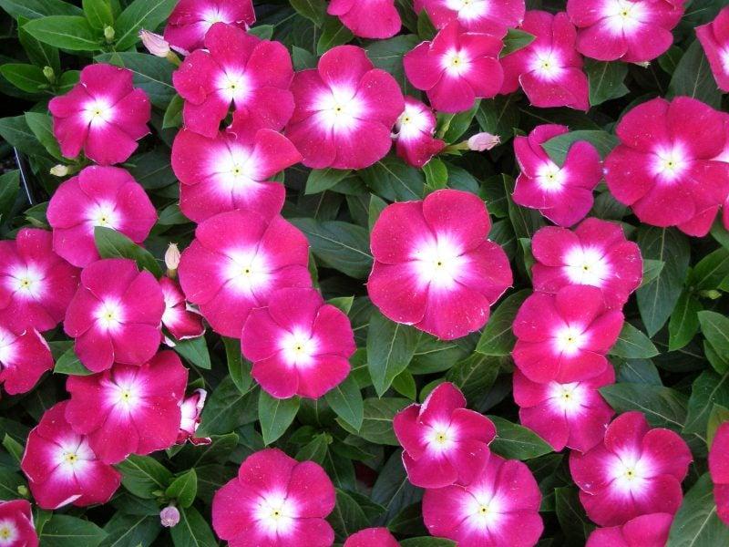 schattenliebende Pflanzenarten