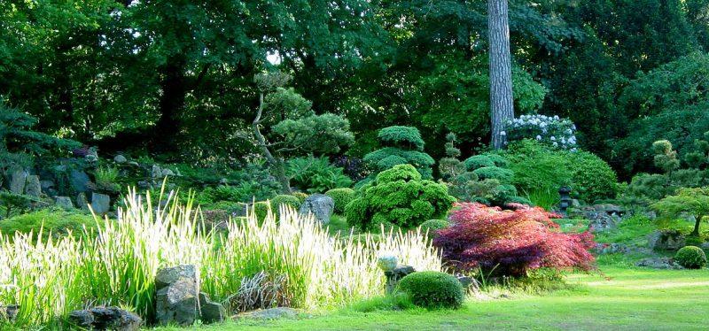 japanischer Steingarten Pflanzenarten