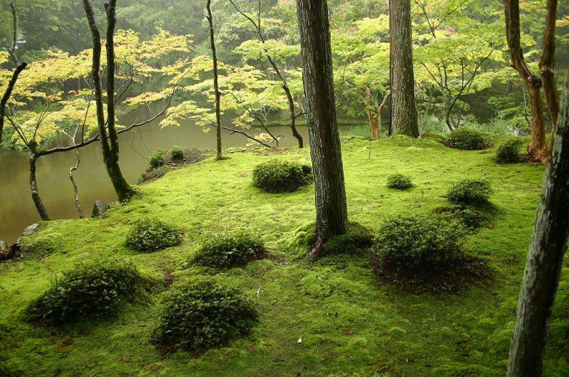 die Natur hautnah erleben