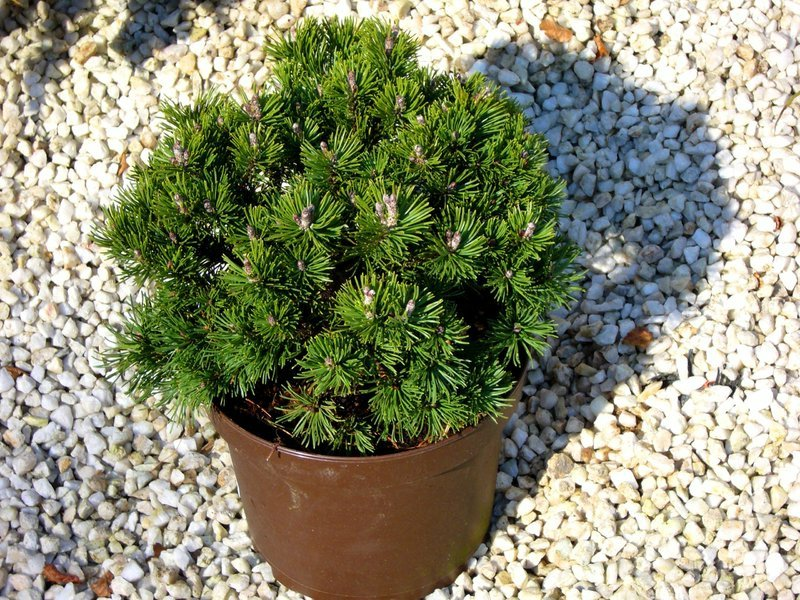 winterharte dekorative Pflanzenarten