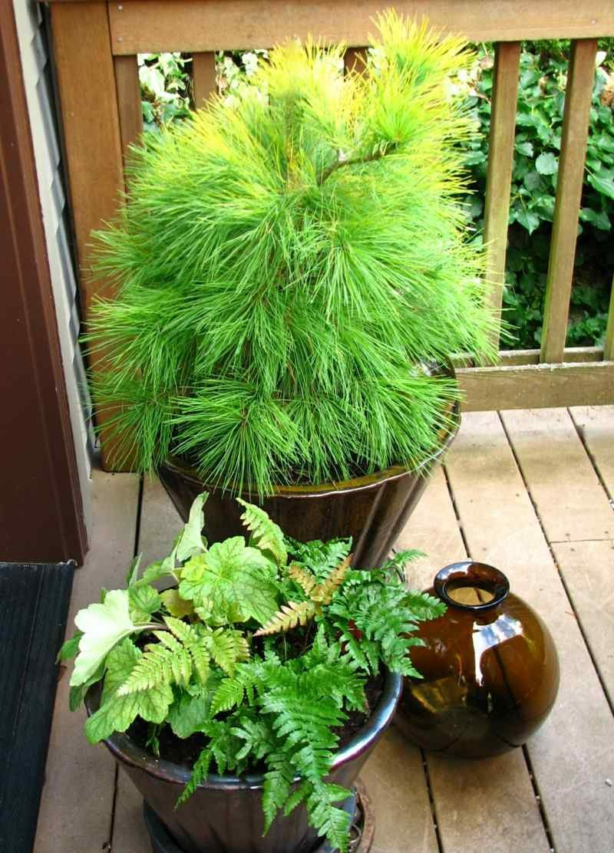 winterharte Balkonpflanzen