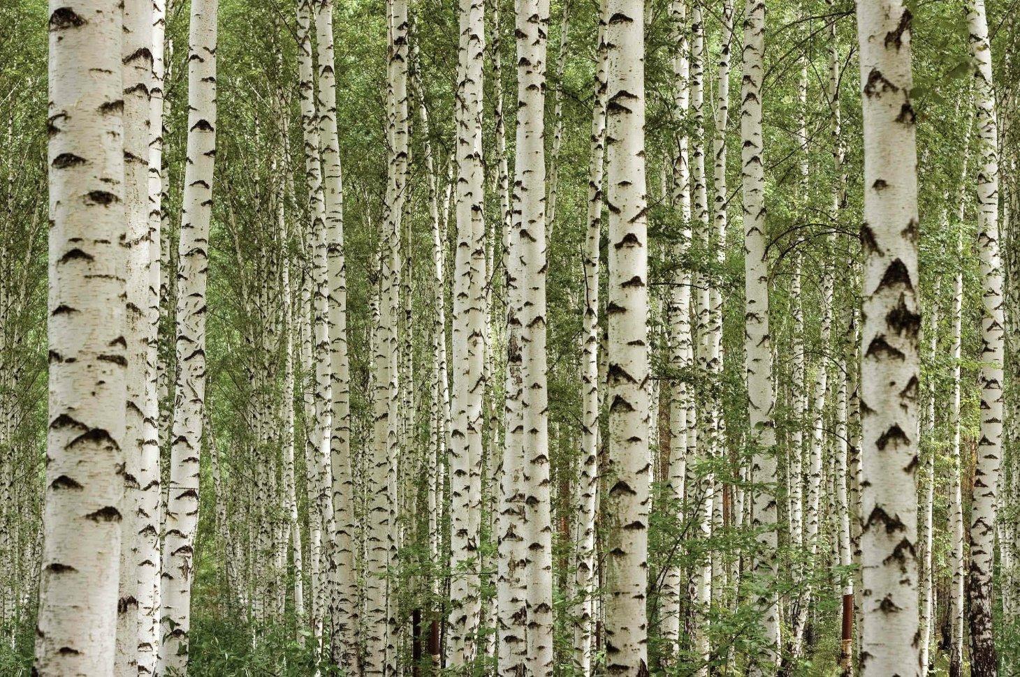 35 Ideen Für Birkenstamm Deko U2013 Bringen Sie Die Natur In Ihre Wohnung