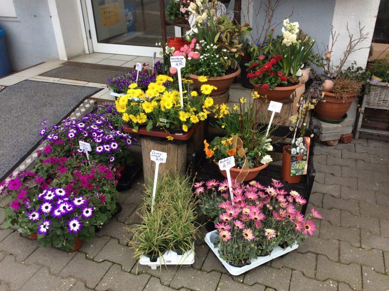 Terrassenbepflanzung passende Pflanzenarten