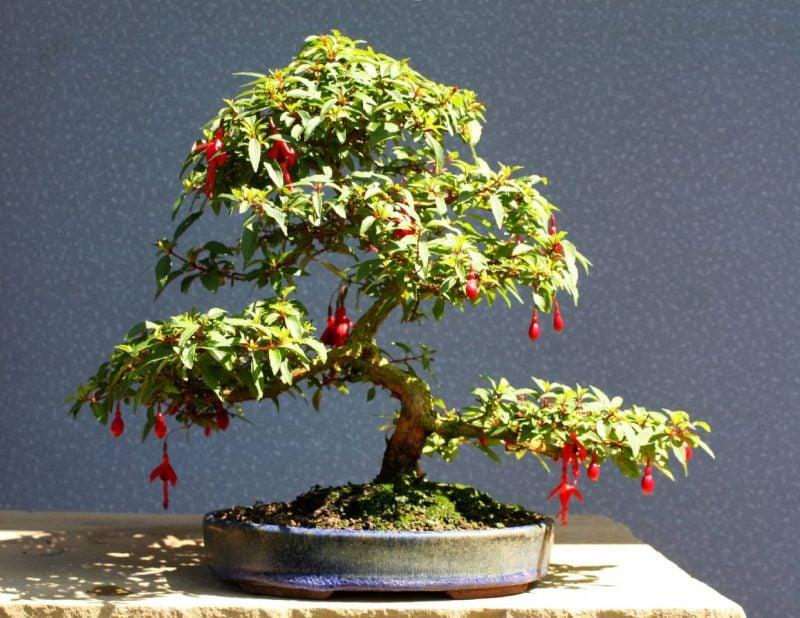 Bonsai Arten Artenfuhrer