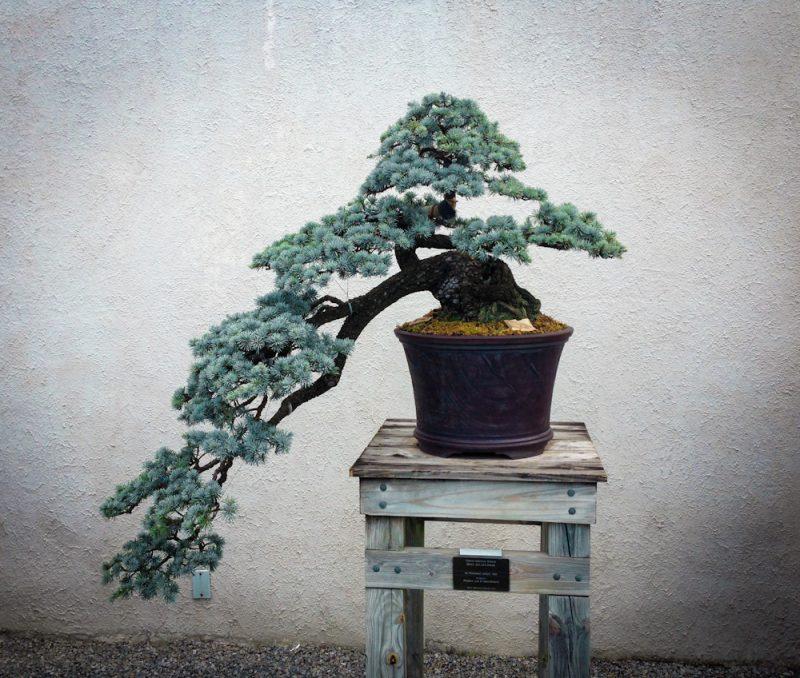 Bonsai Arten Anleitung