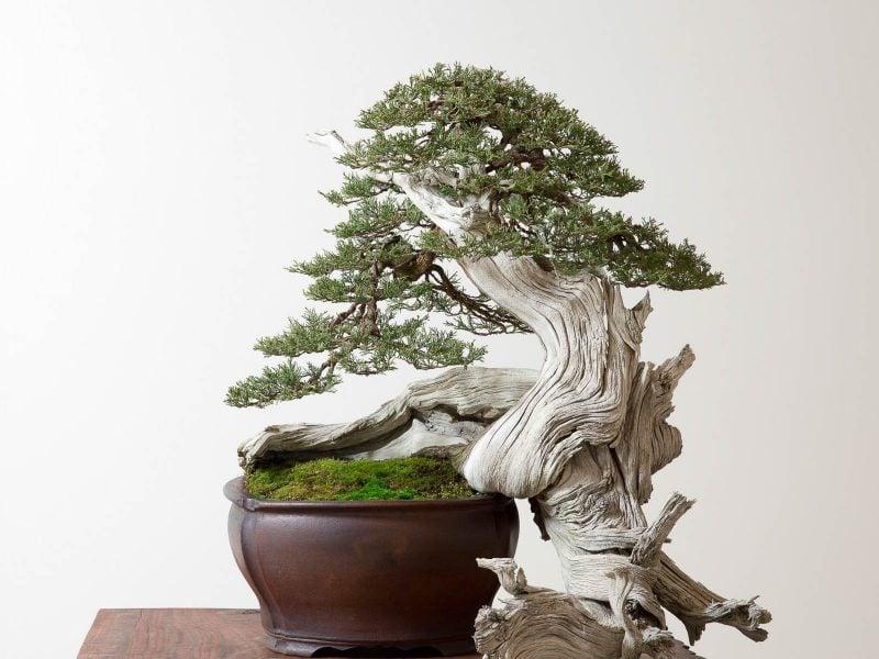 Bonsai Arten Pflege
