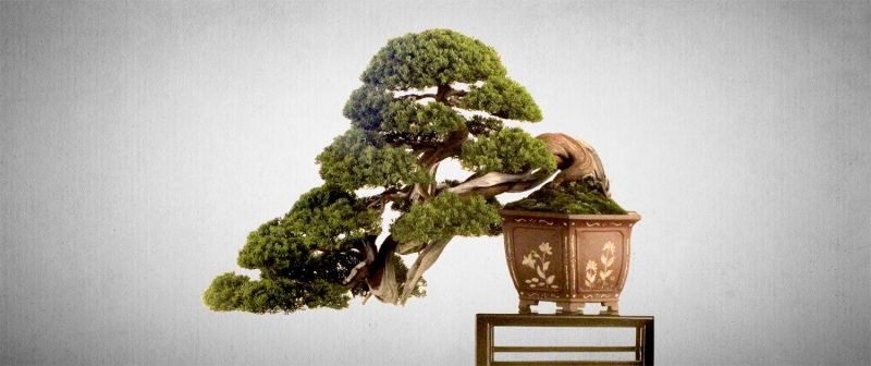 Bonsai Arten Baume