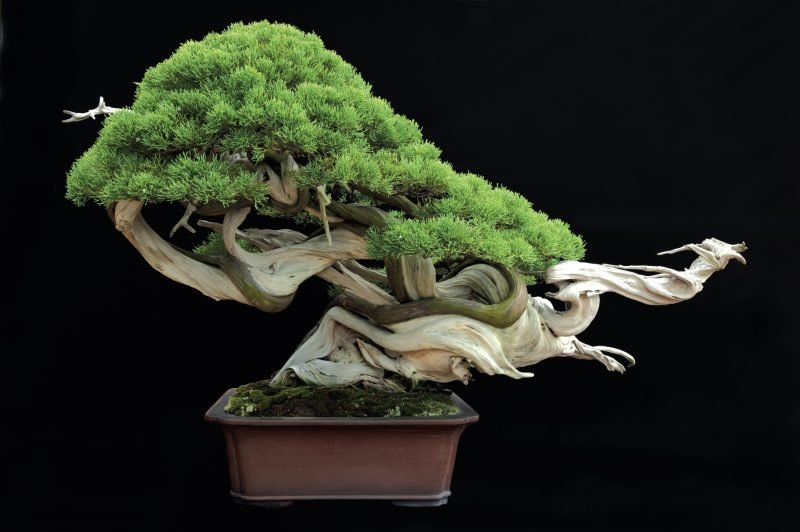 Bonsai Arten Design