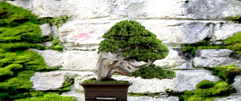 Bonsai Arten Desing