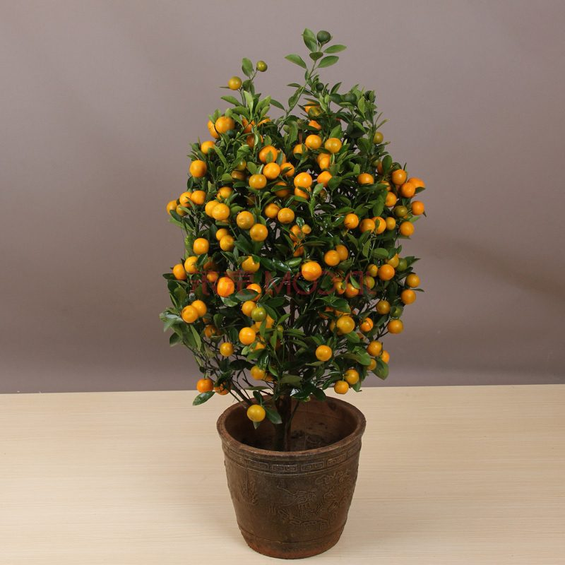 Bonsai Arten Orange