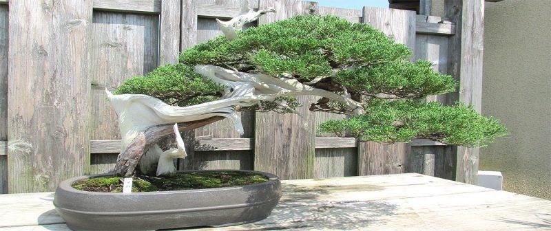Bonsai Arten Pflegeanleitung