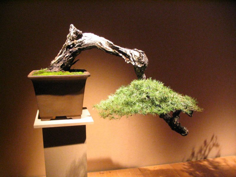 Bonsai Arten Stylisch