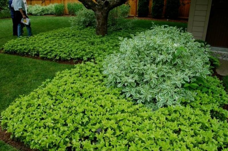 Schattenpflanzen Gartengestaltung