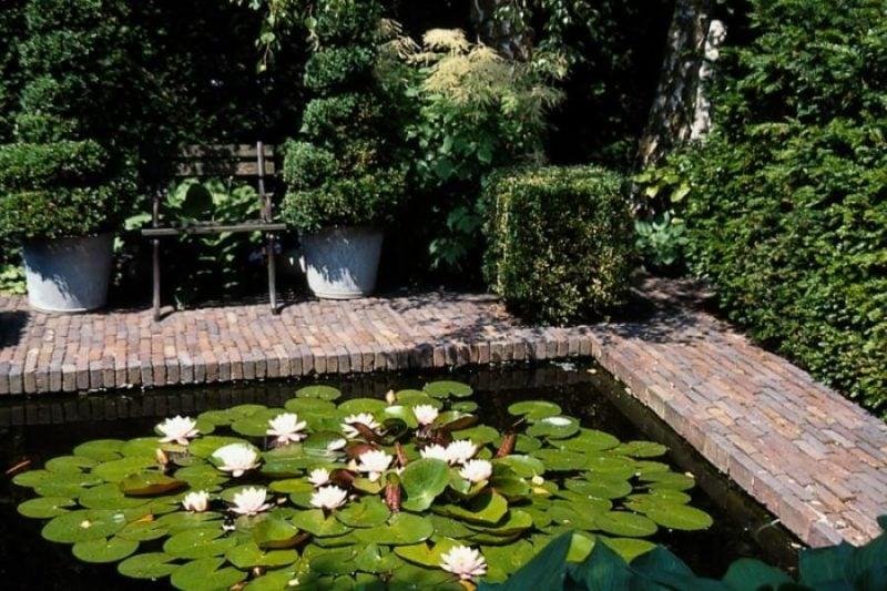 Gartenteich Bilder Lilien
