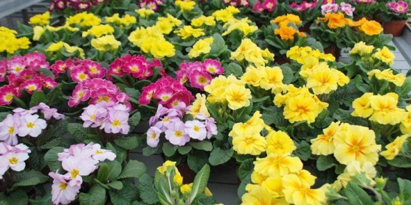 blühende Pflanzen Terrasse