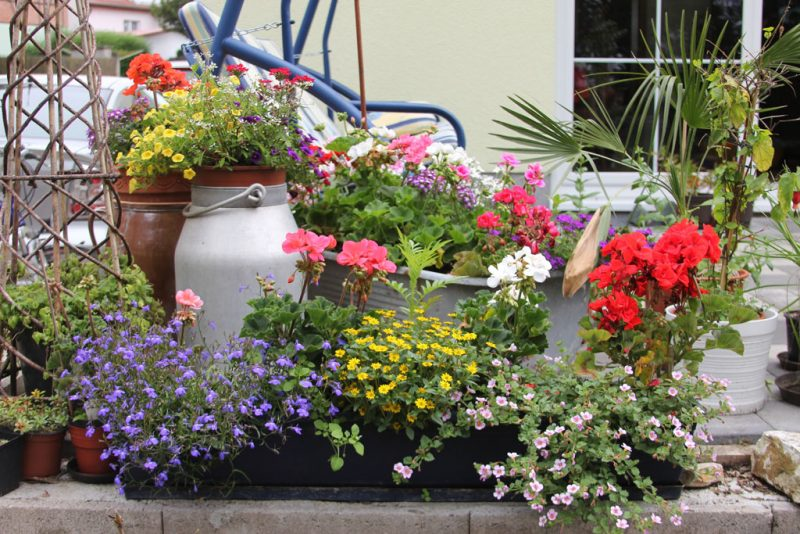die Terrasse bepflanzen