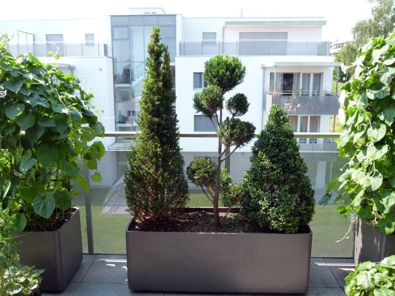 Terrassenbepflanzung immergrün