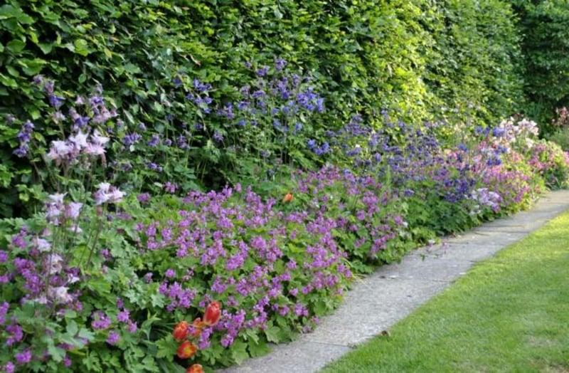 6 arten von schattenpflanzen f r einen wundersch nen garten for Kreative gartengestaltung