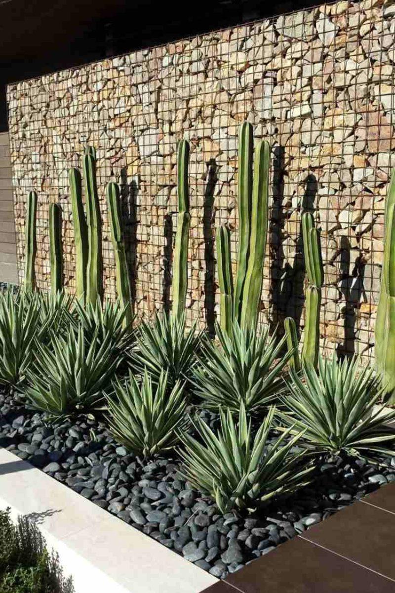 Gabionenzaun und tropische Pflanzen originelle Gartengestaltung