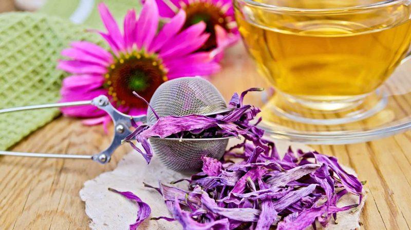 natürliche antibiotika echinacea tea 2