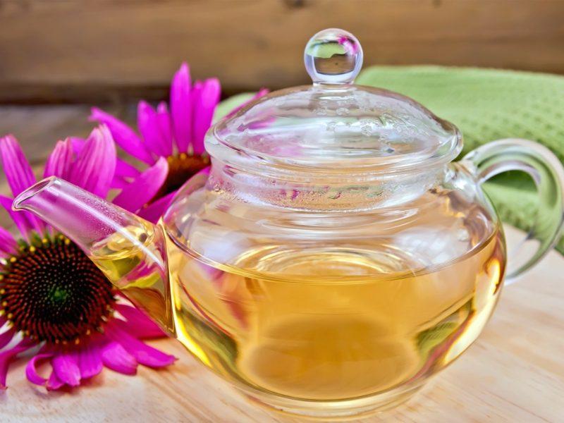 natürliche antibiotika echinacea tea