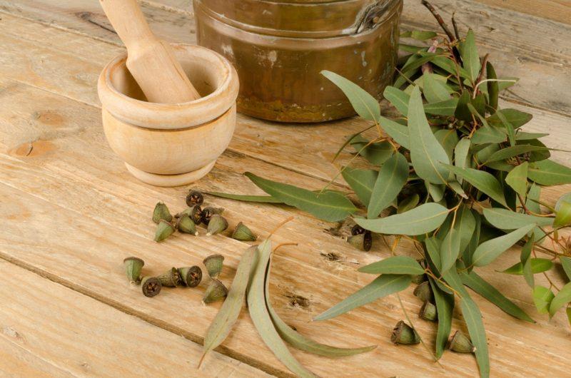 natürliche antibiotika eukalyptus