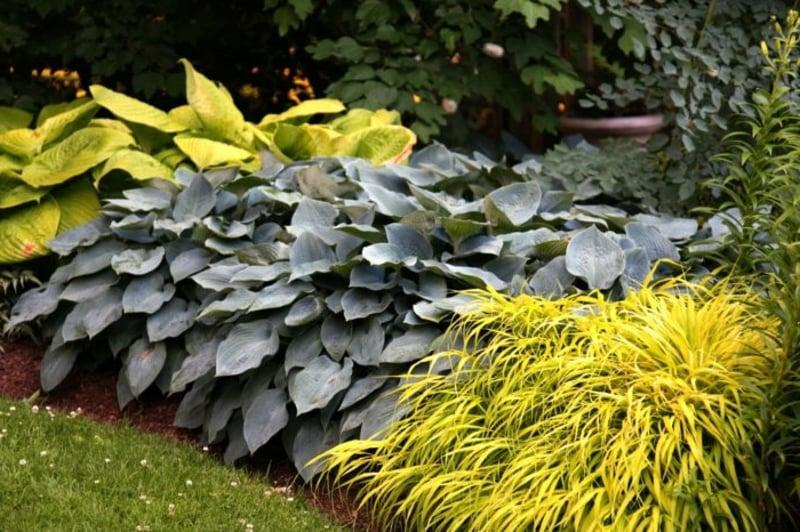 Schattenpflanzen Ideen zur Gartengestaltung